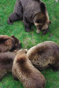 A pile of bears